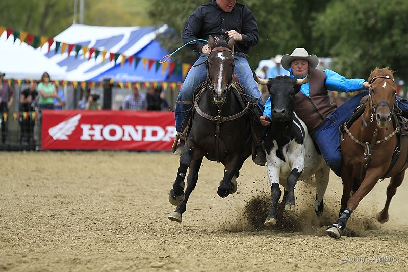 New Zealand Rodeo Cowboys Association Gallery